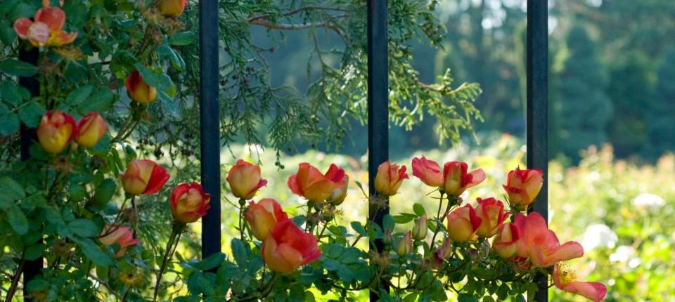 Garten Abgrenzen Mit Stil Wohnen Faz