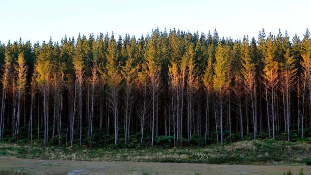 Wie Neuseeland seinen Wald rettet