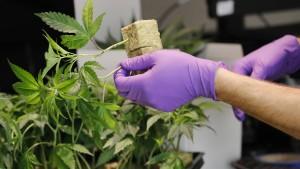40 Milliarden Dollar Einnahmen durch Cannabis-Legalisierung?