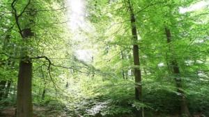 Wirtschaftsgut Wald