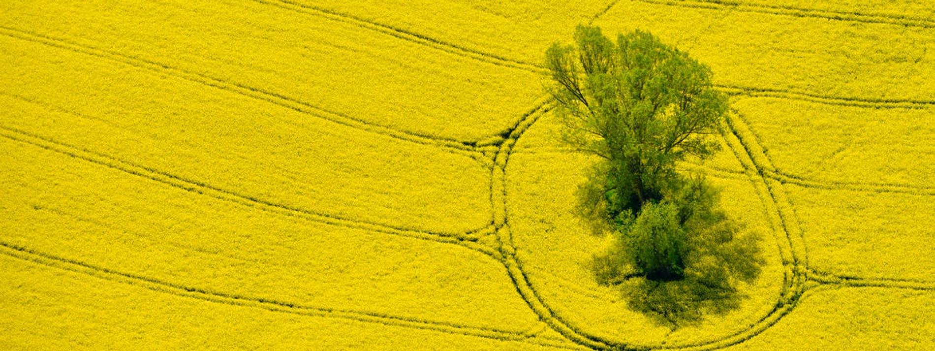 Biosprit macht Menschen hungrig