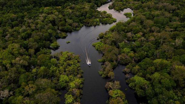 Investoren rufen zum Ende der Amazonas-Abholzung auf