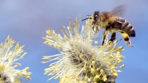 Das Bienendrama