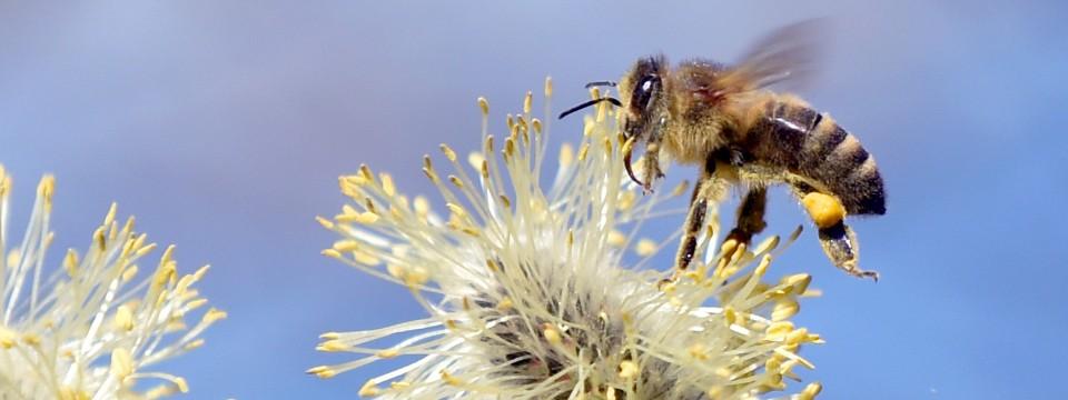 Warum die Welt ohne Bienen ein befremdlicher Ort wäre