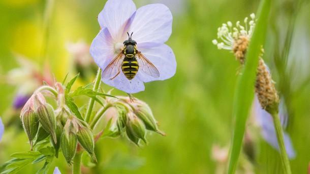 Insektensterben, na – wer weiß?