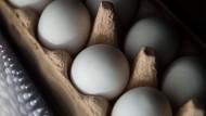 Steigt das Risiko für Herzerkrankungen durch eine erhöhte Eierzufuhr?