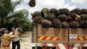 Das Palmöl soll grüner werden