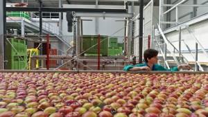 EU hilft Obstbauern gegen Russland