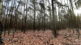 So viele tote Bäume wie noch nie
