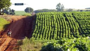 Nur noch kleine Wachstumsinseln in Südamerika