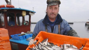 Nordsee-Fischer dürfen mehr Hering fangen