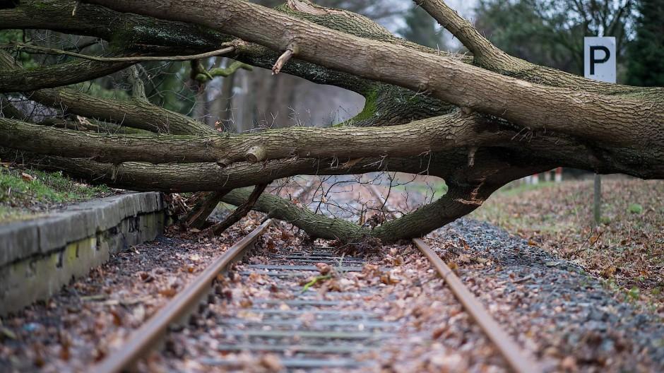 Um solche Bilder und die dazugehörigen Störungen im Bahnverkehr wie hier in Nordrhein-Westfalen zu vermeiden, soll der Verkehrsminister den leichteren Beschnitt der Bäume ermöglichen.
