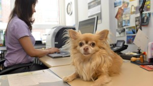 Streicheleinheiten gegen den Stress im Büro