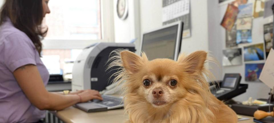 Haustiere Am Arbeitsplatz Streicheleinheiten Gegen Den Stress Im