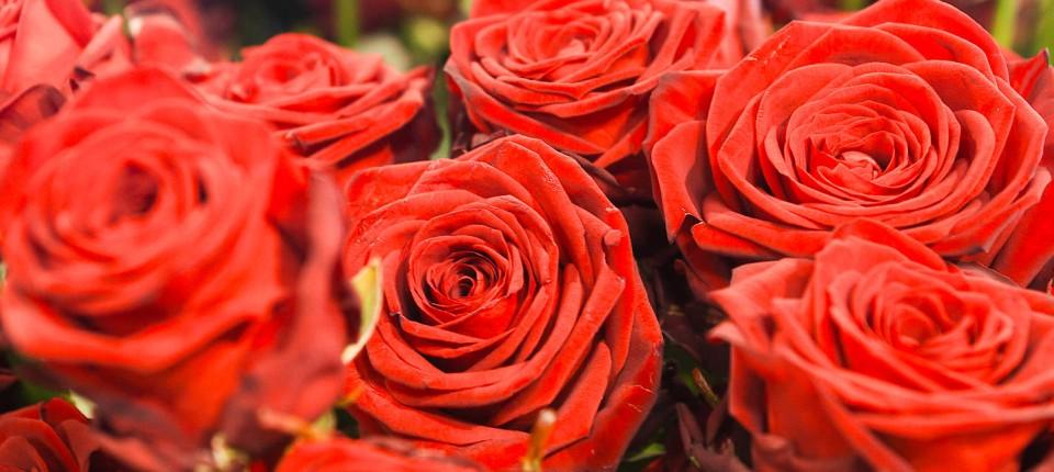 Valentinstag in dresden