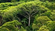 Drei Billionen Bäume bevölkern die Erde.