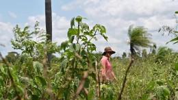 Empresas multinacionais do agronegócio, cuidado!