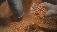 Schimmelgifte in Tierfutter: Betroffen seien 10.000 Tonnen Futter