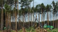 Tesla-Werk in Brandenburg: Umweltschützer wollen gegen weitere Rodung vorgehen