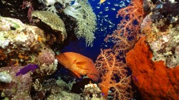 Forscher dringen auf Schutz von Korallenriffen
