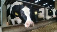 Die Kuh Emmelie und der Verfall des Milchpreises