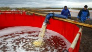 Der letzte Öl-Vorfall in der russischen Arktis, der hier zu sehen ist, ereignete sich erst vor wenigen Wochen – und war auch da auf das Unternehmen Nornickel zurückzuführen.