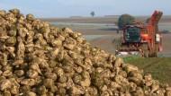 Ein Berg Arbeit: Zuckerrübenernte im nordhessischen Schwalm-Eder-Kreis
