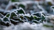 Das kleine Immergrün auch für kalte Zeiten: Efeu und Co. sind die perfekten, ganzjährigen Pflanzen.