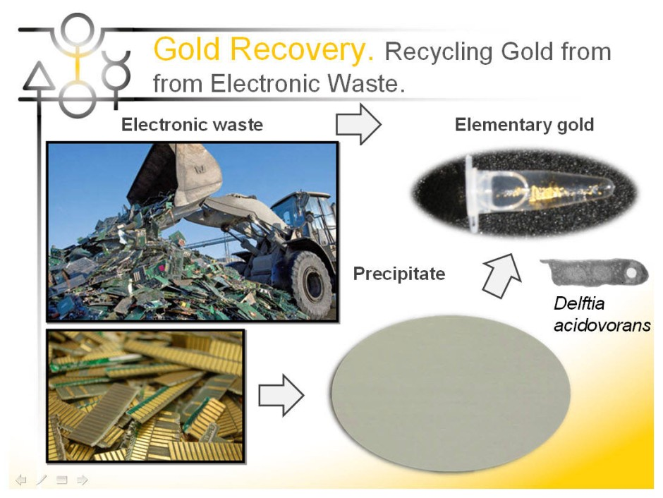 Mikrobielles Gold-Recycling aus Elektronikschrott