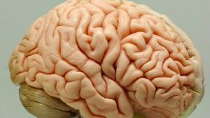 Wie man das Gehirn auch retten kann