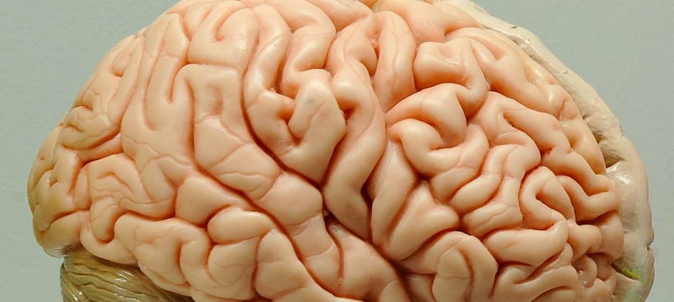 Aus Alt mach Neu: Wie man das Gehirn auch retten kann