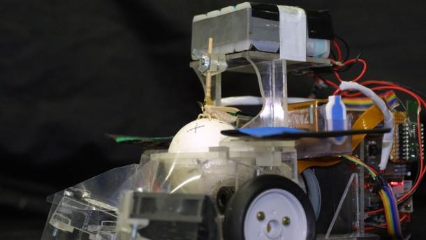 Biomorphe Roboter