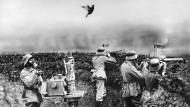 Die Taube und der Krieg: Der Vogel soll 1917 über einer deutschen Stellung an der Westfront testen, ob die Luft wieder rein genug ist, damit die Soldaten die Gasmasken abnehmen könne