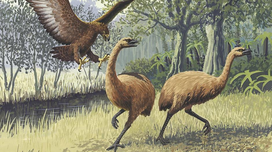 Die großen Adler haben auf Neuseeland genau so wenig überlebt wie die Moas (künstlerische Darstellung von John Megahan).