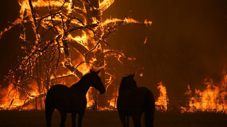 Apokalyptische Analogien: Buschbrände in Australien.