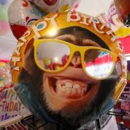 Ein Affe? Ein Luftballon!