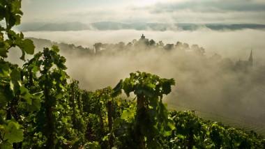 Wein ist schön, macht aber viel Arbeit. Und auch für die Umwelt wäre es kein Schaden, wenn weniger Pilzgift auf die Reben gebracht werden müsste.