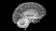 Gehirn im Computermodell