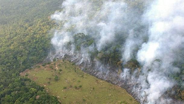 Waldrodung, Klima, Regenwald: Natur und Wissenschaft, Erde