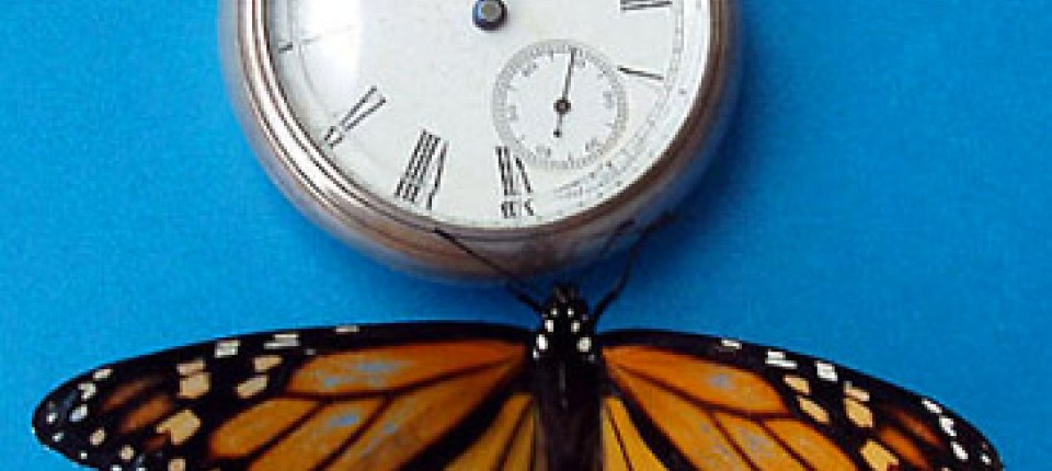 Schmetterlingslounge datiert uk Millionäre datieren Website