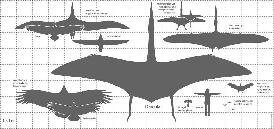 Flugsaurier im Größenvergleich