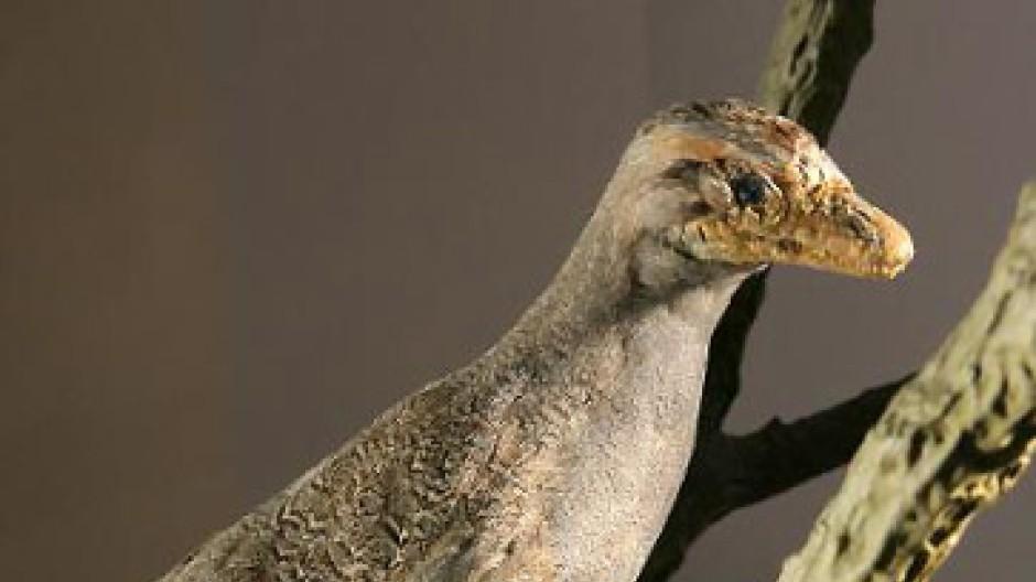 Eine Rekonstruktion des wohl bekanntesten Vogelvorläufers, des Archaeopteryx.