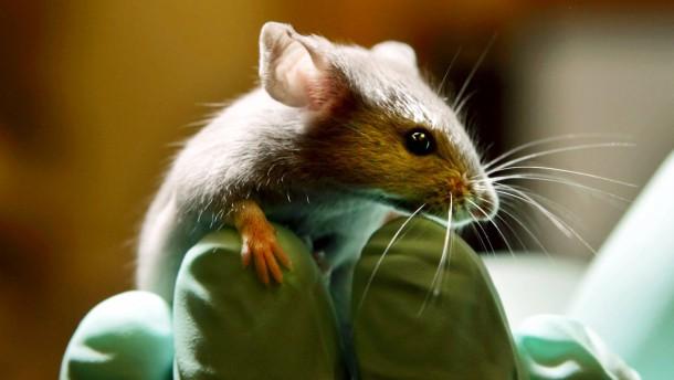 Multi-Organ-Chip stellt Tierversuche in Frage