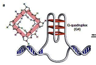 Gepaarte Guanin-Basen: g-motif