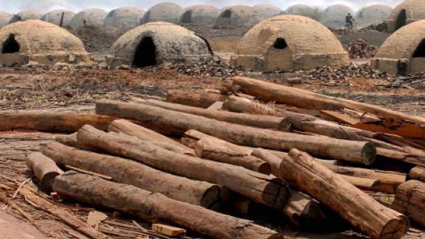 Der Klimapfennig für den Urwald