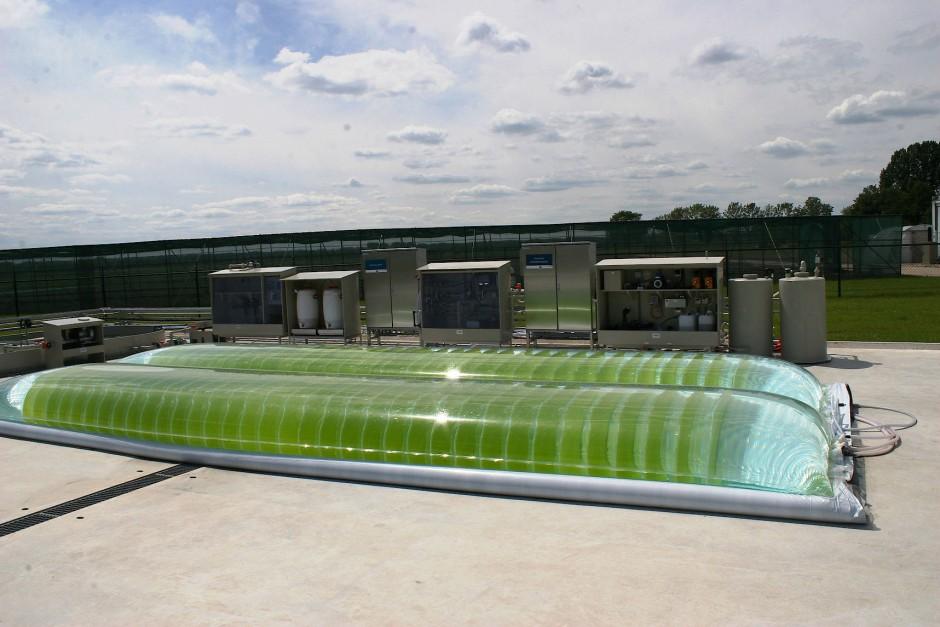 Können künftig mit Algenfarmen wie hier in einer Pilotanlage in Wageningen nennenswerte Mengen Kohlendioxid in wertvolle Produkte umgewandelt werden?