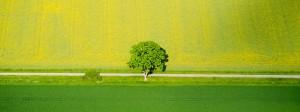 Monokulturen und der Einsatz von Agrarchemikalien stehen im Verdacht als Auslöser des Insektenschwunds.