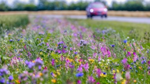 500 Hektar Blühflächen an Äckern zusätzlich