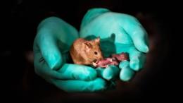 Alles geht, solang du eine Maus bist