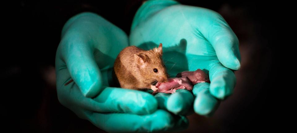 Keine Hamster datiert Matchmaking-Start-up